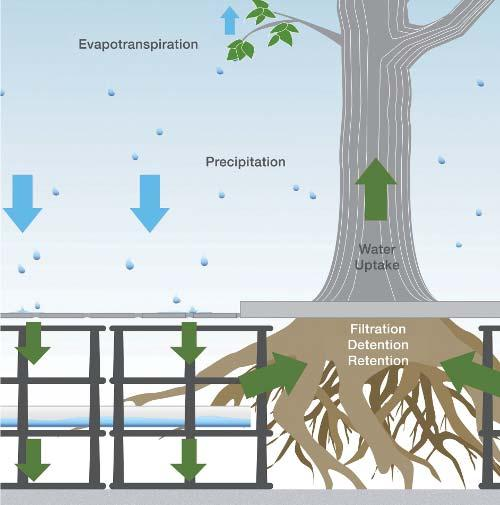 Silva cells and suspended porous pavement technologies support larger and healthier trees by