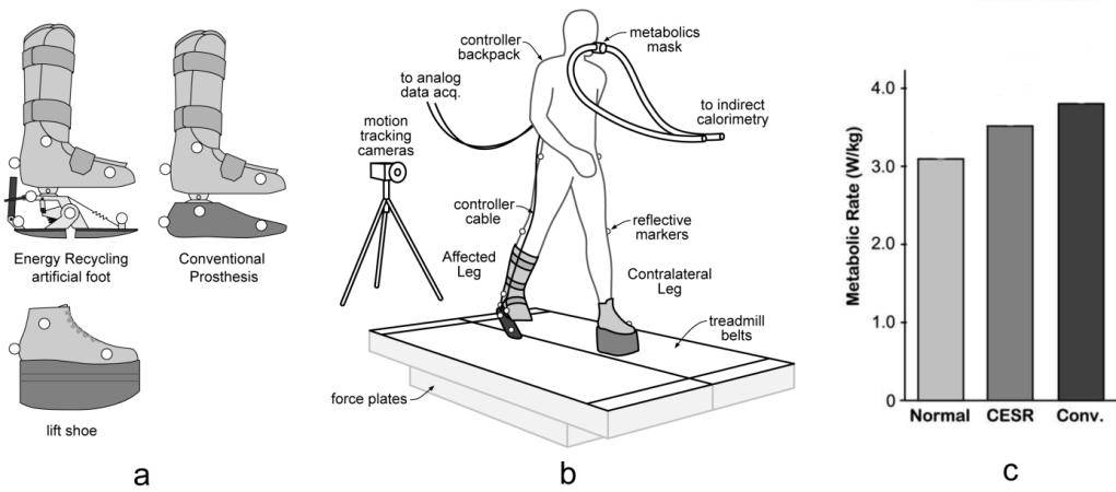Kuo (Collins, 2009) tested the artificial foot on able-bodied human subjects walking with an artificially-immobilized ankle, at a speed of 1.25 m/s.
