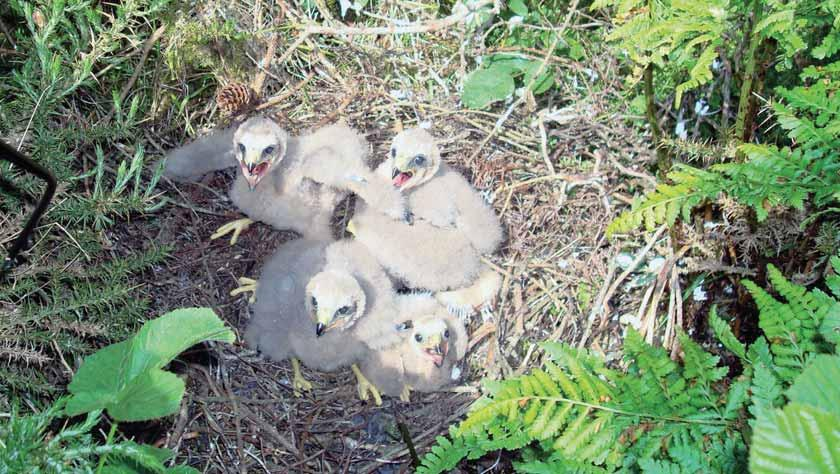 3 Egg collecting and disturbance Case studies Photographer on Isle of Man fined for disturbance of hen harriers In 2009, there were 63 reported incidents of egg collecting and egg thefts, and two