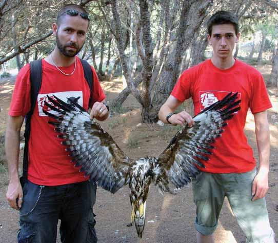 Malta is the only EU member state where a flock of 12 black storks were reduced to four within a day in 2008, where lesser spotted eagles were shot down within hours of their arrival over the past