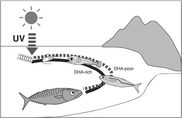 Behavioral Ontogeny of Marine Pelagic Fishes for Sustainable Management of Fisheries Resources 27 and Prorocentrum micans decreased to 50 and 20%, respectively, after 5 6 days of UV exposure under
