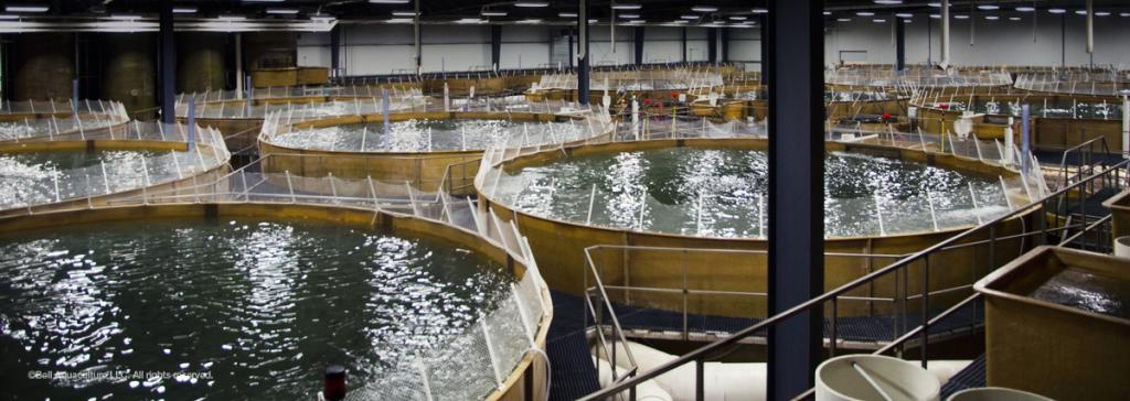 Bell Aquaculture, Albany, IN