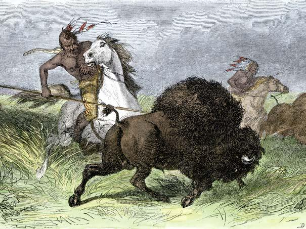 They would ride toward the herd until the bison started running. Then the hunters would ride right alongside the animals, spearing them or shooting them with either bows and arrows or guns.