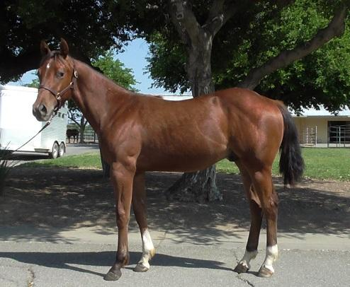 Registration Pending 2014 Chestnut Filly Playin N Powder 2014 Bay Gelding Female Line: Dam: ISABELLA GANGSTER by GANGSTER CHIC earner of $8,476: 7 th, NRCHA Futurity Non-Pro; 4 th, NRCHA Futurity