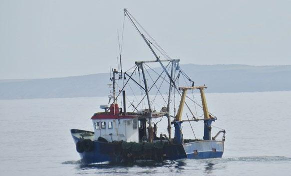 THE FISHERY High summer and Prawns abound. The fishery has fluctuated according to weather and tides. Kilkeel scalloper Jack the Lad, N89 leaving Peel.