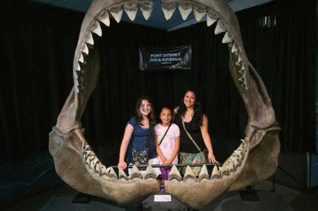 North Pacific Aquarium Megalodon Jaw This jaw model is the actual