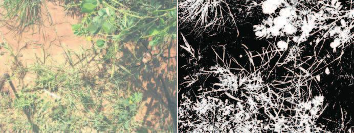 Schmidt et al. Fig. 3: Digital photo (left side) classified in vegetation and bare soil with a maximum likelihood algorithm (right side). Fig. 3: Photo numérique (gauche) classifiée en végétation et sol nu avec un algorithme de maximum de vraisemblance (droite).
