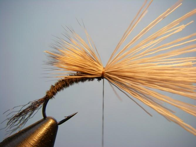 With the tips pointing rearward to about halfway down the body, secure the deer hair with a few loose wraps and then a