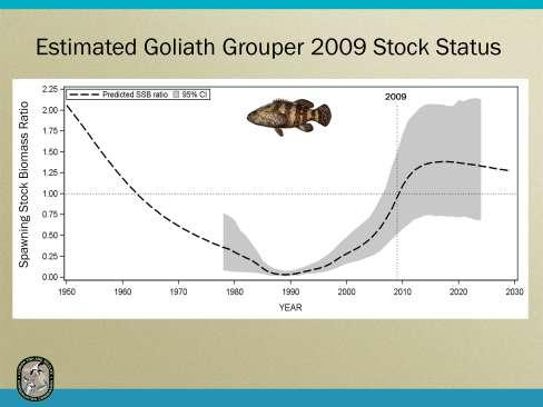 This graph shows the spawning stock biomass (SSB) ratio (annual biomass relative to biomass at 50% SPR) of goliath grouper for the period 1950-2025 as estimated by the stock assessment model (values