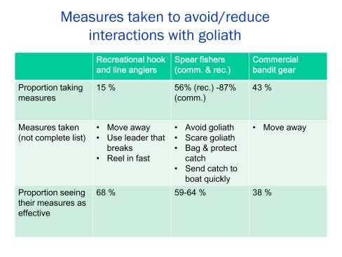 A majority of commercial and recreational spear fishers (87% and 56% respectively) reported taking measures to reduce goliath interactions and their impacts, including: avoiding goliath, scaring