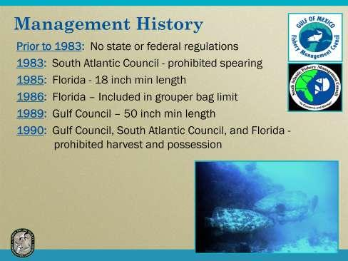 Prior to 1983 there were no state or federal regulations regarding the commercial or recreational harvest of goliath grouper.