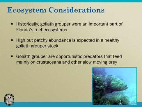 Historically, goliath grouper were an important part of Florida s reef ecosystem. A high but patchy abundance is expected in a healthy goliath grouper stock.