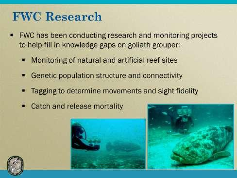 FWC s research is aimed at developing more complete information on the density and size distribution, habitat use, site fidelity, and movement patterns of goliath grouper at natural and artificial