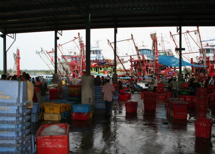 2.5.2 Government Market Intervention Ishak (1994) further observed that attempts by the Fisheries Development Authority (LKIM) to intervene in the fish marketing system through fish trading projects