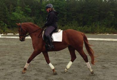 Ginger Long is Combined Trining; horse triner, riding instructor, coch