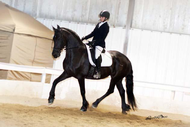 Dressage Suitability Horses potential as a Dressage mount is to be considered.