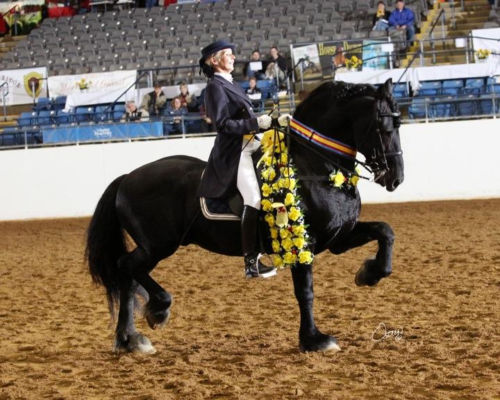 Dressage Hack Horse s ability as a Dressage mount is to be highly considered.