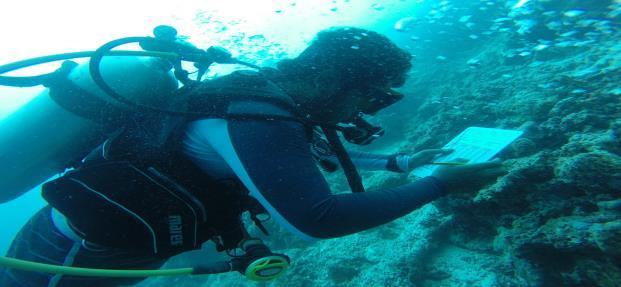Dive or snorkel with local conservationists and actively contribute to our conservation effort in Villimale.