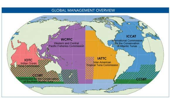 Tuna RFMOs (Regional Fisheries Management Organizations) RFMO: International body made up of countries that share a practical and/or financial interest in managing and conserving fish stocks in a