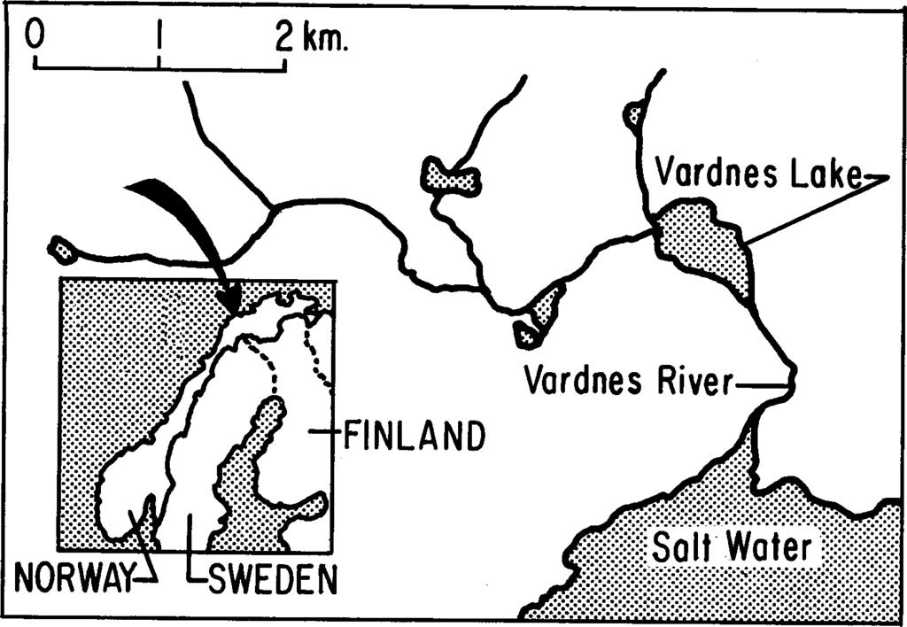 178 OLE A. MATHISEN AND MAGNUS BERG 2 km. Vardnes Lak FINLAND Vardnes River NORWAY SWEDEN Fig. 1. Map of the Vardnes River. and another trap for upstream migrants.