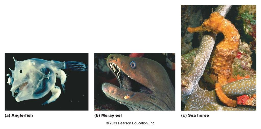 Some unusually adapted bony fish Amphibians -Animals that live part of