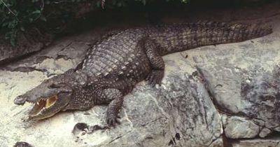 Reptiles - Have a tough, scaly skin that resists water loss.