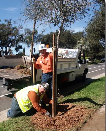 Benefit Trees create shade, a healthy environment, add to the character of the