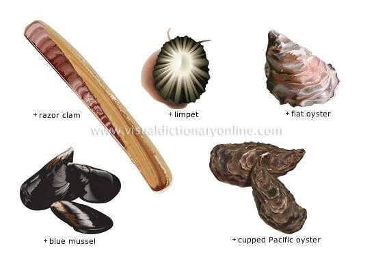 Shells Found in snails,