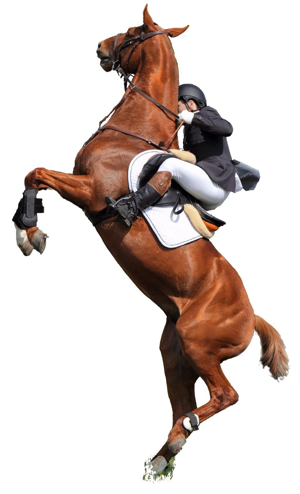 Protecting Horse and Rider from Long-Term Damage Signs of Poor Saddle Fit to Rider feeling pulled apart at the hips back pain neck