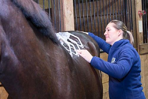 Your on-site personal assessment includes dynamic and static measurements, assessments, and analyses of horse, rider and saddle.