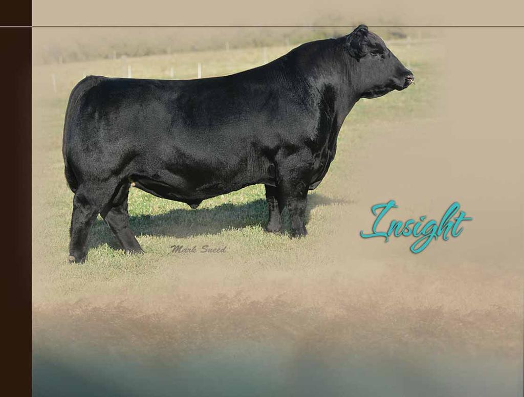 P V F 0 1 2 9 Leased to Genex/CRI This PVF bred herd sire has become one of the most popular bulls in the Genex/CRI lineup.