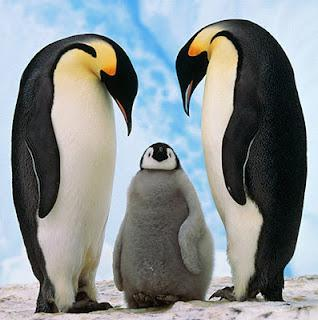 The Emperor is the biggest kind about 4 feet tall. What Do Penguins Eat? Penguins eat fish.