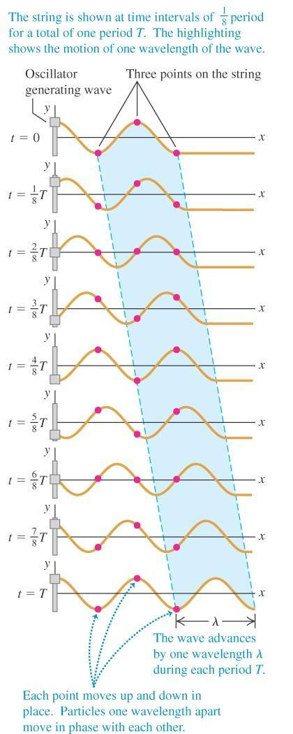 Periodic transverse waves For the