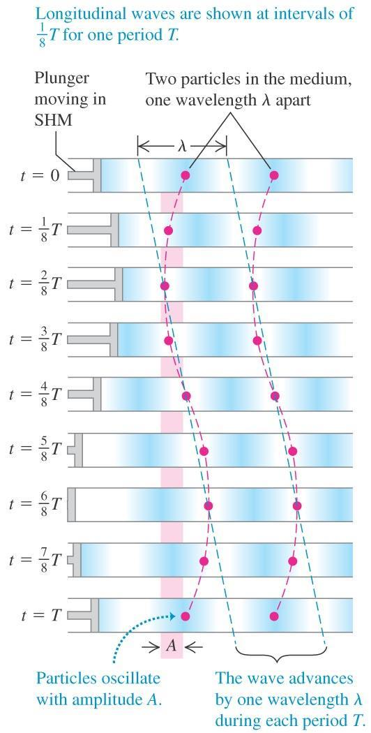 Periodic longitudinal waves For the longitudinal