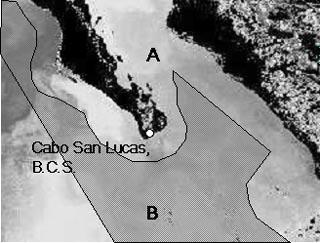 484 Marine and Freshwater Research S. Ortega-García et al. Table 1. Number of trips and striped marlin caught at Cabo San Lucas, B.C.S., during 199 1999 No. of trips No.