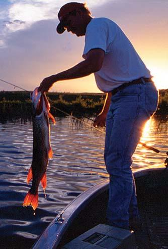 Economic Contributions by Type of Fishing All Fishing Freshwater Saltwater Great Lakes Anglers 29,952,000 25,035,000 8,528,000 1,506,000 Expenditures/ Retail Sales $45,335,939,822 $31,182,648,546