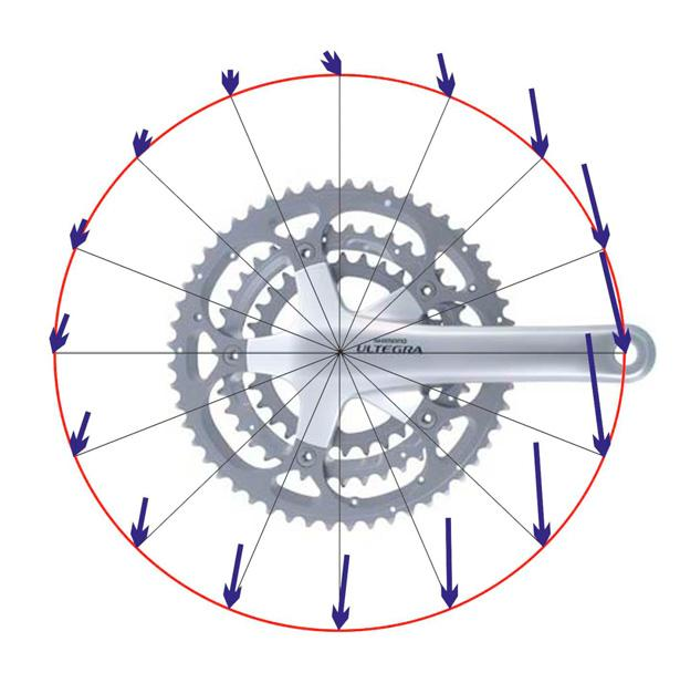 3214 F. Höchtl et al. / Engineering 2 (2010) 3211 3215 Fig 4: Pedal force direction and magnitude during crank rotation Fig. 4 visualises the resulting pedal forces during one rotation.