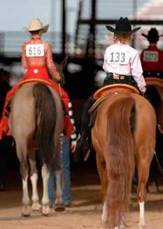 Dressage is often compared to Western reining. Hunter classes can be on the flat or over fences.