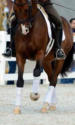 Credits English Riding vs. Western Riding: An Overview of English and Western Riding Sports and Saddles Bandages and boots are just two examples of English schooling tack and equipment.