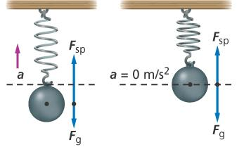 14.1 Periodic Motion Potential Work When the external force holding the object is released, the net force and the acceleration are at their maximum, and the velocity is zero.