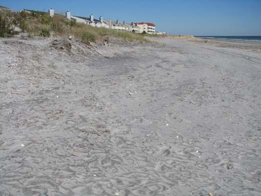 The photograph on the right was taken on October 25, 2011 wind blown sand had accumulated near the dune toe.