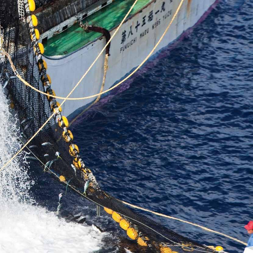 Tackling illegal fishing Often, the foreign fleets operating in the Western and Central Pacific take tuna without either reporting their catches or following national, regional or international laws.