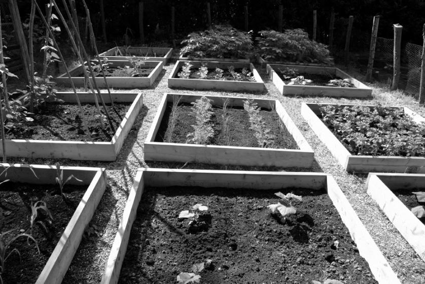 Question 2 (25 marks) The width of a rectangular vegetable patch is x metres. Its length is 5 metres longer than its width.