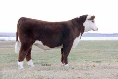 Lot 89 Lot 90 C Bar1 9161 Untapped 2267 ET C Bar1 Untapped 2268 ET C BAR1 9161 UNTAPPED 2267 ET03/11/2012 89 THM DURANGO 4037 CRR ABOUT TIME 743 CRR D03 CASSIE 206 TH 89T 743 UNTAPPED 425X ET NPH 20X