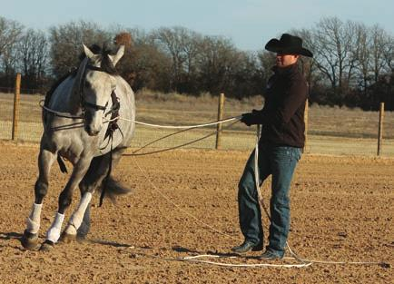 Horsemanship, Dan Steers, are very well suited to offer advice in achieving success with long-lining techniques in a friendly,