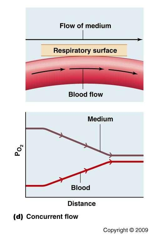 Concurrent Flow PO 2 of the blood to