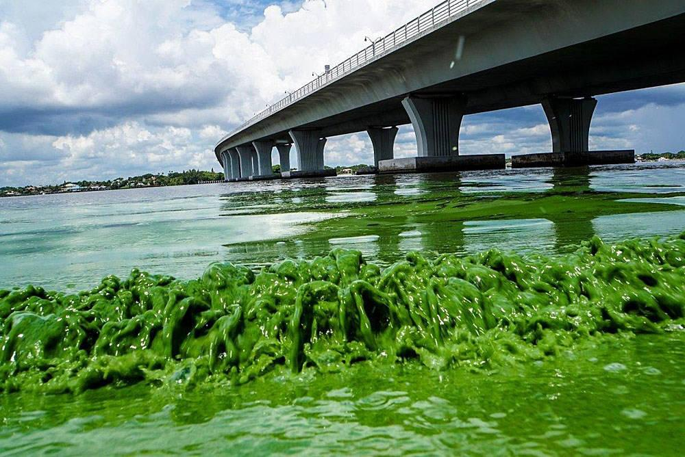 Could algae blooms affect the Coastal Bend? - KRI Page 1 of 1 http://www.kristv.