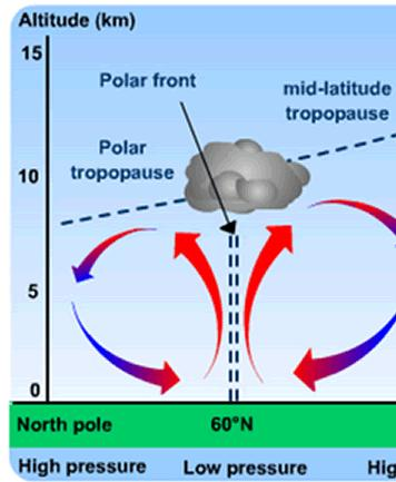 Polar Cell There is also a similar third cell, namely the Polar cell, which forms between 60 and 90 north and south of the equator.