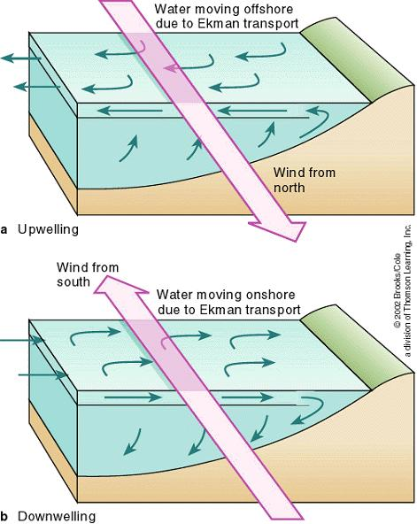 Upwelling and Downwelling The upper figure shows that if the wind blows parallel to the coast in one direction, it causes the surface water to move away from shore.