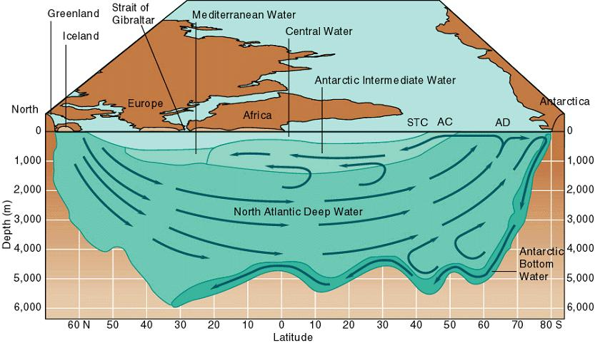 Thermohaline Circulation This cross-section through the Atlantic from north (left) to south (right) shows